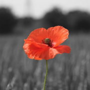 armistice-day-beaconsfield-november-2018