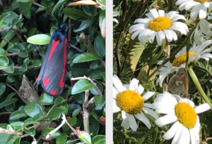 hotspur-bottom-butterfly-reserve-competition